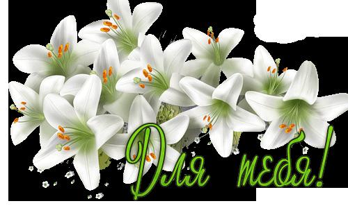 Открытки цветы для любимой лилии 69